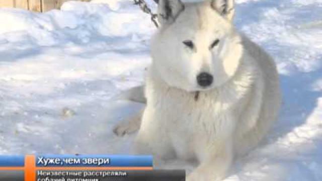 Неизвестные расстреляли вольер спородистыми собаками.