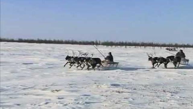 ВПуровском районе прошли традиционные гонки снегоходных бригад.