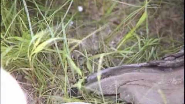 Полчища гусениц в Новом Уренгое. Чего стоит опасаться?