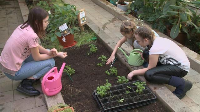 Втеплице центра «Садко» готовят почву для нового урожая