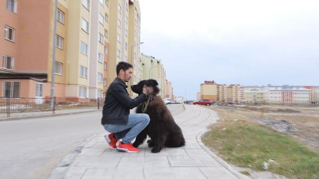 Новоуренгойцы нежелают убирать засвоими собаками