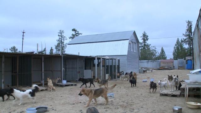 ВНовом Уренгое появится ещё один приют для животных