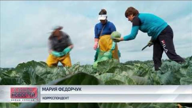 НаЯмале вновь стартуют сельхозярмарки оттюменских производителей.