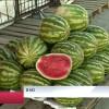 ВНовом Уренгое начали продавать первые арбузы.
