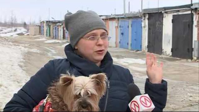 Пёс покличке Ямал две недели путешествовал поокругу водиночку.