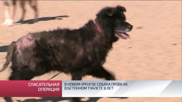 ВНовом Уренгое собака провела вбетонном туалете 8лет.