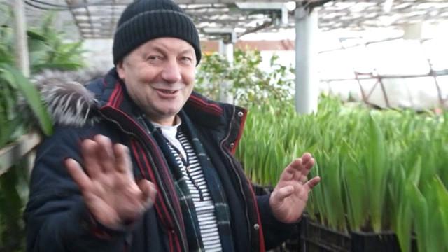 Агрономы МУП «Уренгойское городское хозяйство» готовят цветы к Международному женскому дню