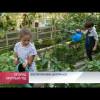 Воспитанники центра «Садко» собирают урожай, выращенный своими руками.