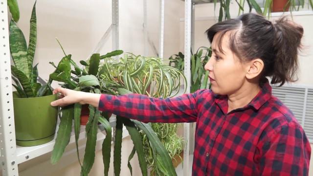 Агрономы МУП «Уренгойское городское хозяйство» предлагают к8марта альтернативу традиционным тюльпанам