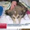 Новоуренгоец выбросил свою собаку изокна 8этажного дома.