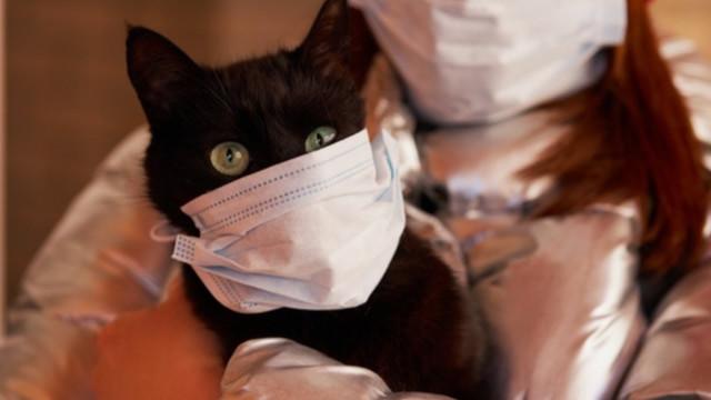 Жительница Нового Уренгоя оскорбила сотрудников ТРК «Импульс» из-за поста окошачьем коронавирусе