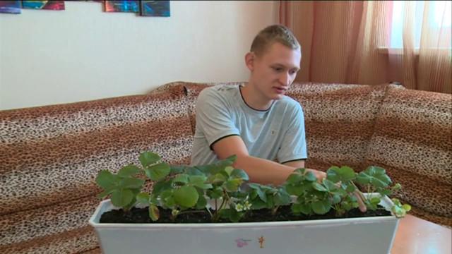 Юный агроном намерен найти самую стойкую исамую вкусную клубнику.