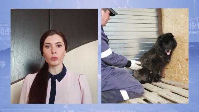 Центр помощи бездомным животным активно работает попрограмме «Отлов-стерилизация-вакцинация-возврат»