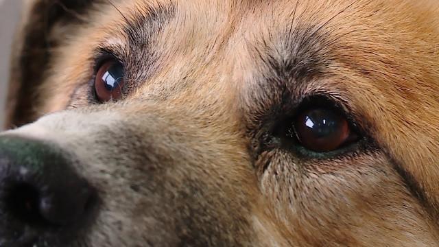 Заботиться о бездомных животных теперь будут не только волонтёры, но и власть