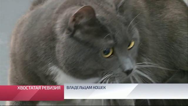Владельцам кошек исобак необходимо подготовить животных котпуску.