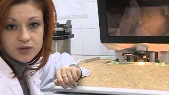 Оленеводы устроили нелегальную продажу мяса вНовом Уренгое.